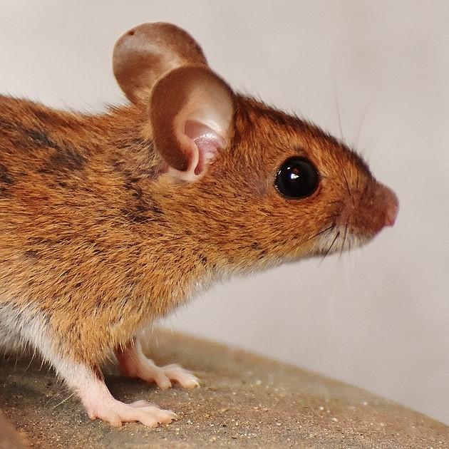 Nie jestem taką zwykłą szarą myszą.